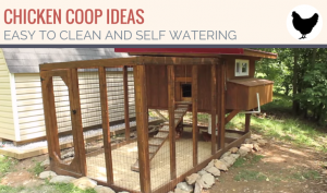 How to Design an Easy to Clean Auto Watering Chicken Coop