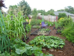 After Being Forced to Destroy Their Organic Garden, this Couple Retaliates in a Great Way